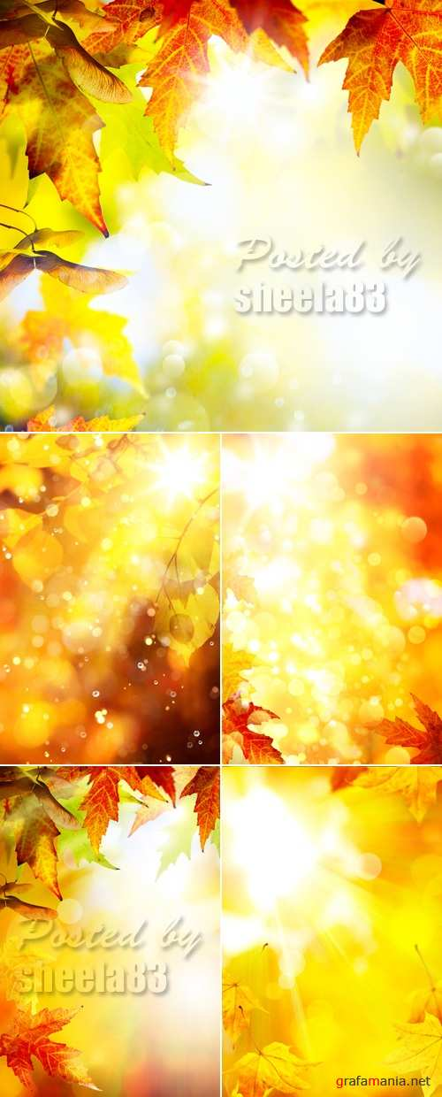 Stock Photo - Autumn Leaves Backgrounds 6