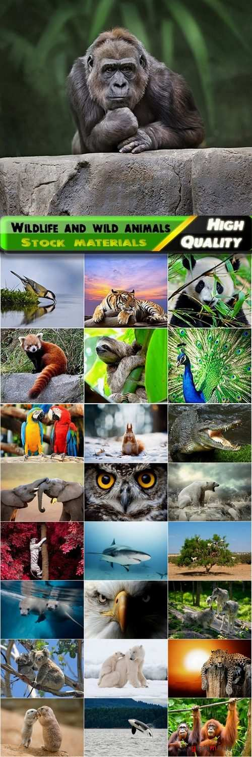 Wildlife and wild animals Stock images - 25 HQ Jpg