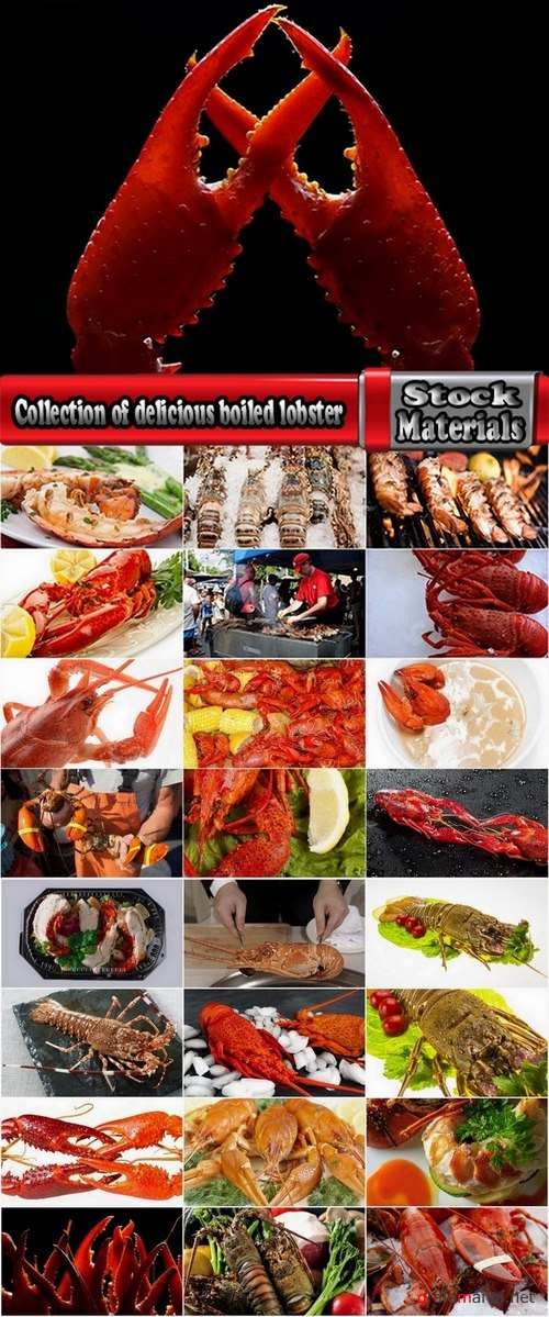 Collection of delicious boiled lobster 25 UHQ Jpeg