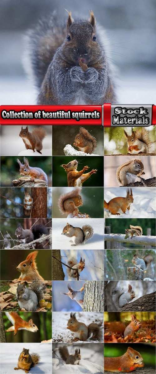 Collection of beautiful squirrels 25 UHQ Jpeg