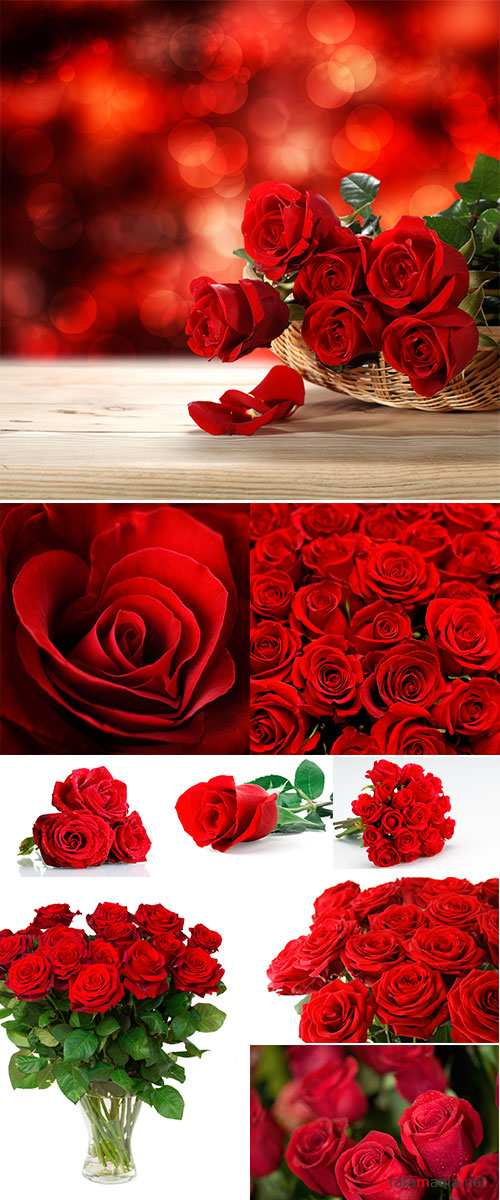 Stock Photo: Bouquet of artificial red roses, isolated, space for copy in the side