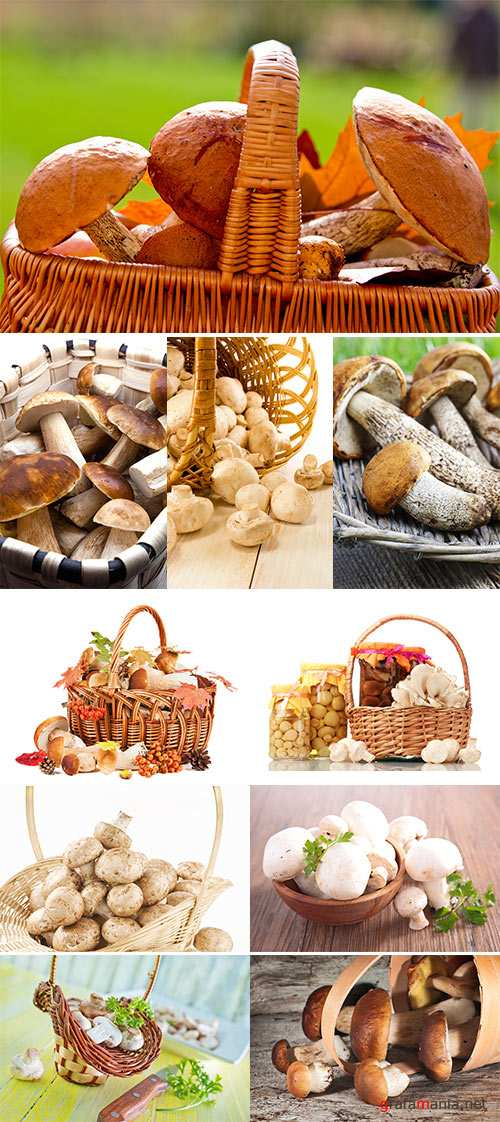 Mushrooms in a basket  -  Stock Image