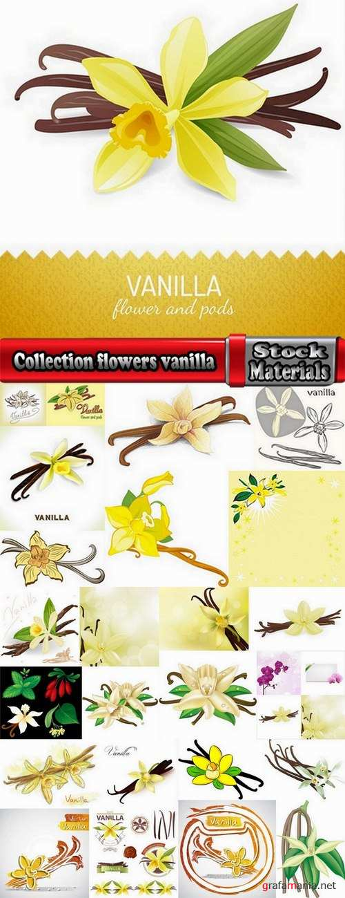 Collection flowers vanilla 25 Eps