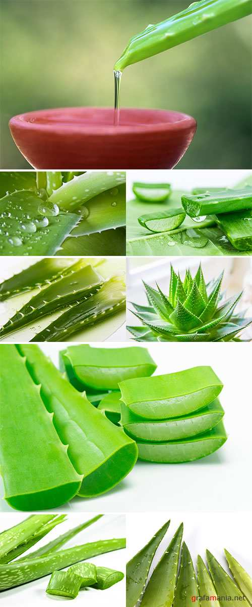 Stock Photo Aloe vera fresh leaf. isolated over white