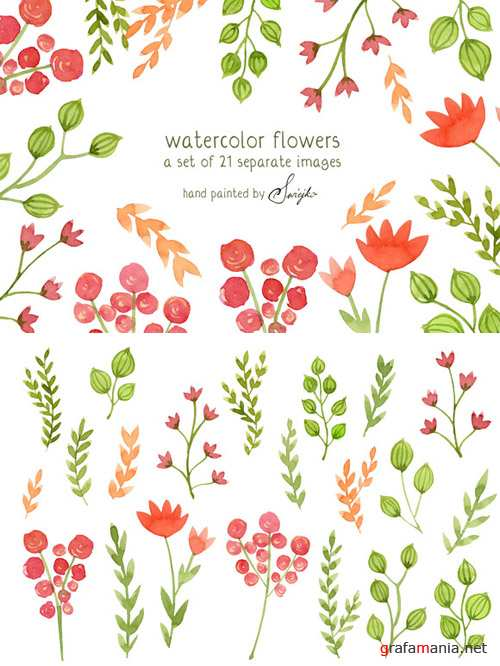 Watercolor Flowers - Floral Clipart PNG