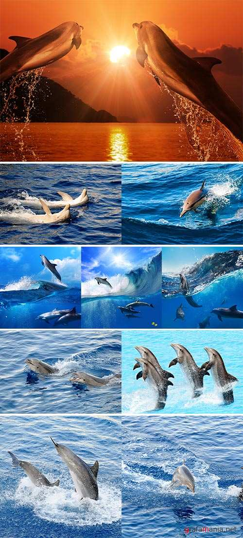 Stock Photo Happy dolphins in the water