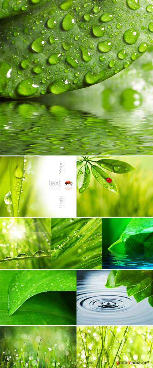 Stock Photo Green leaf with waredrops reflected in th water