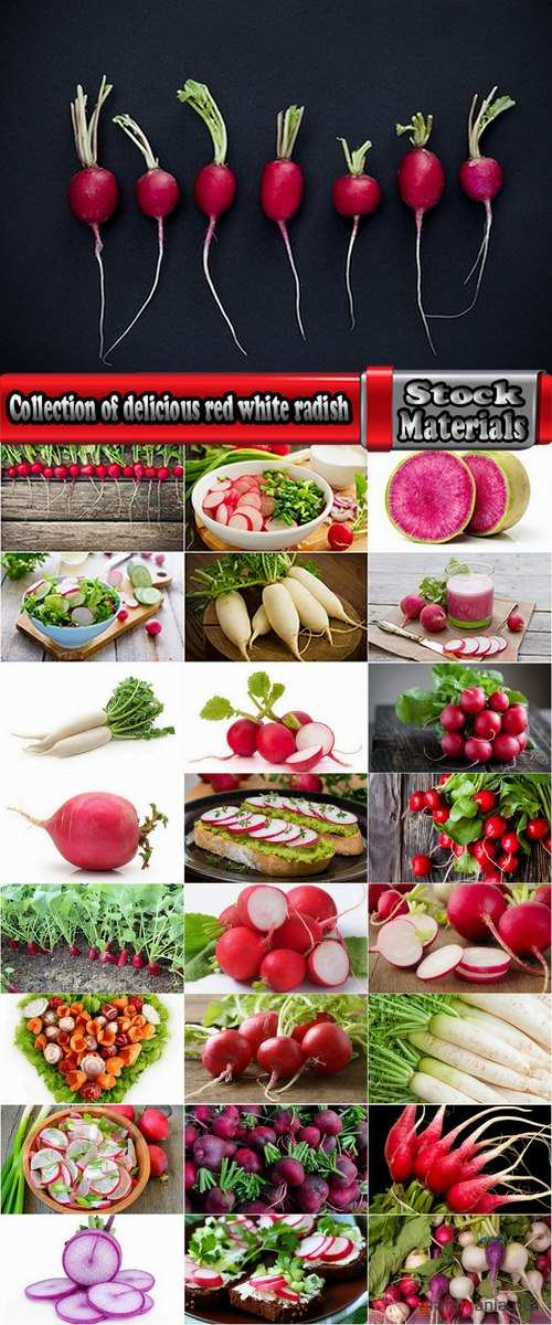 Collection of delicious red white radish salad with radish 25 HQ Jpeg