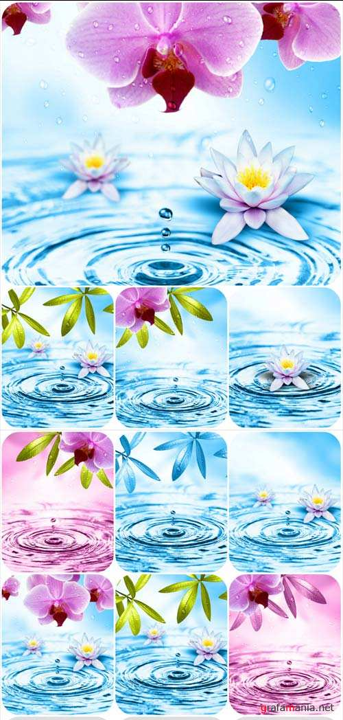 Awesome flowers and water