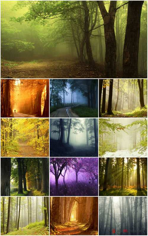 Magical forest stock photos