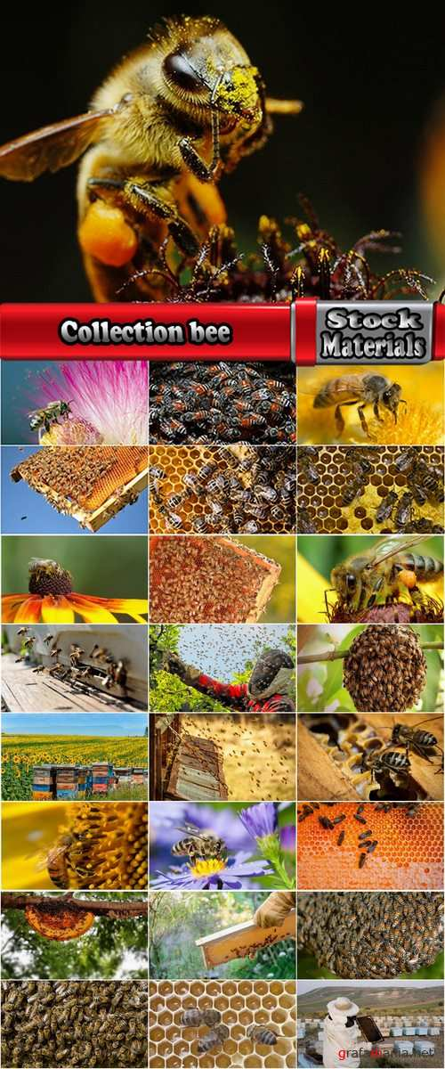 Collection bee swarm hive beekeeping honey 25 HQ Jpeg