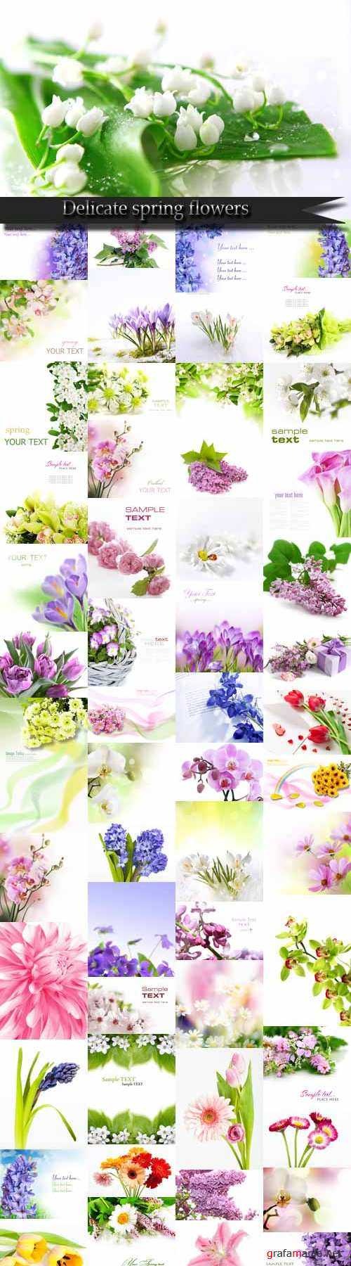 Delicate spring flowers Raster Graphics