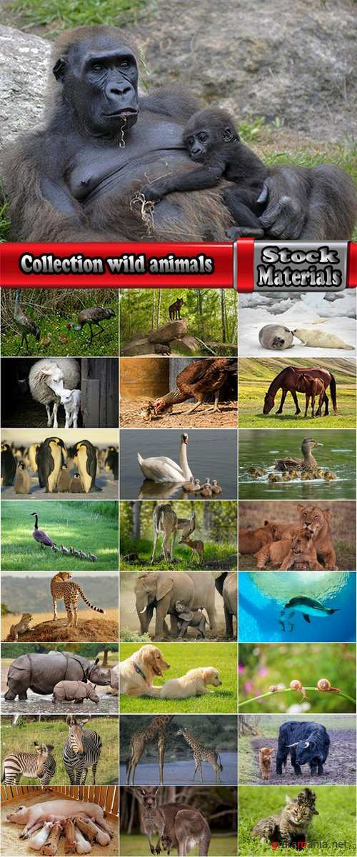 Collection wild animals with young offspring 25 HQ Jpeg