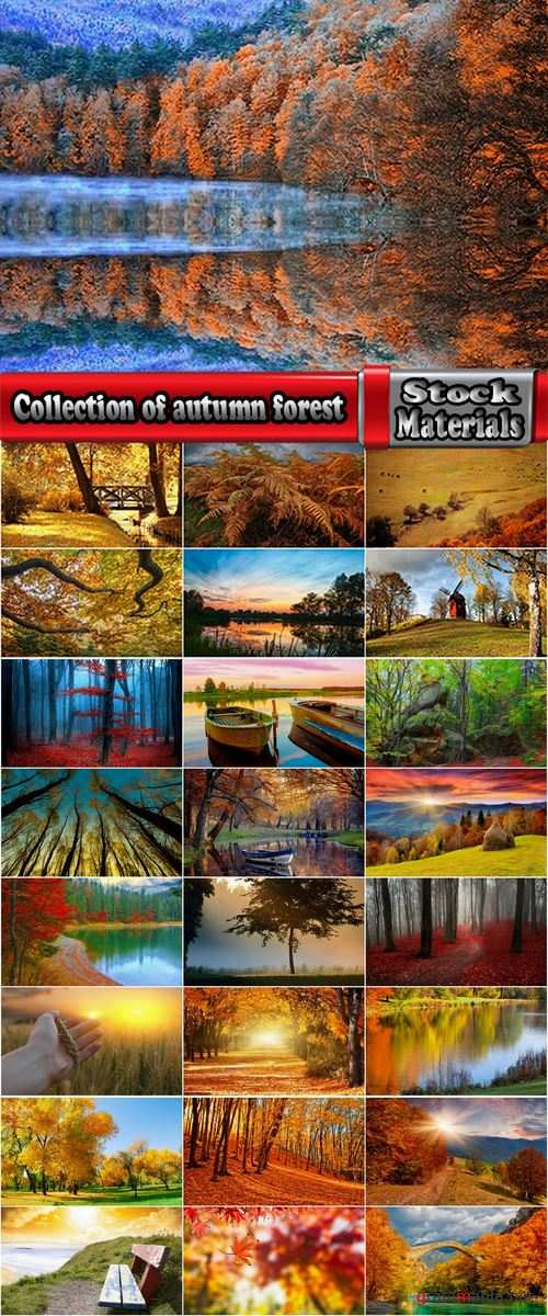 Collection of autumn forest fall landscape mountain nature river meadow yellow leaf 25 HQ Jpeg