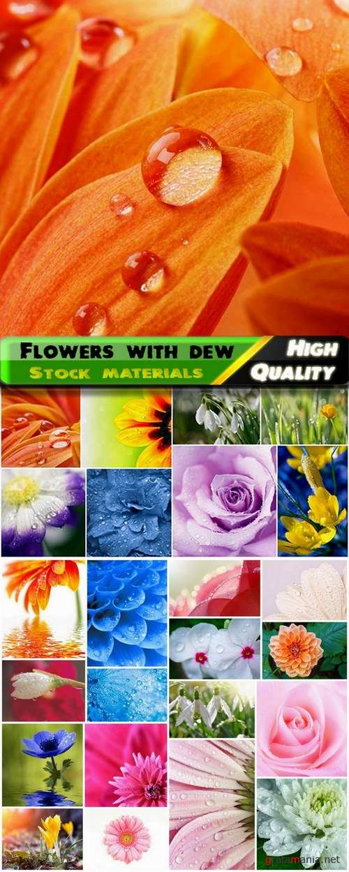 Different macro photo of flowers with dew - 25 HQ Jpg