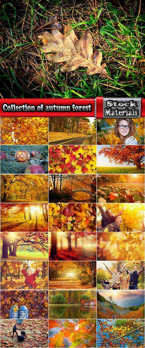 Collection of autumn forest fall landscape mountain nature river meadow yellow leaf #2-25 HQ Jpeg