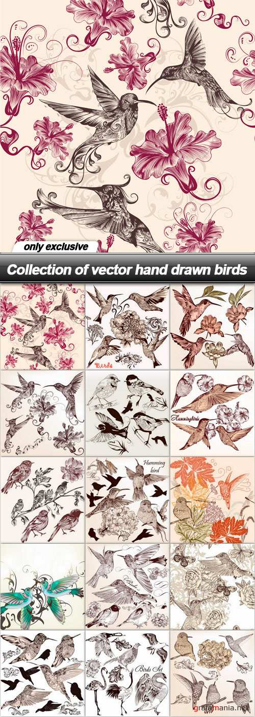 Collection of vector hand drawn birds - 15 EPS