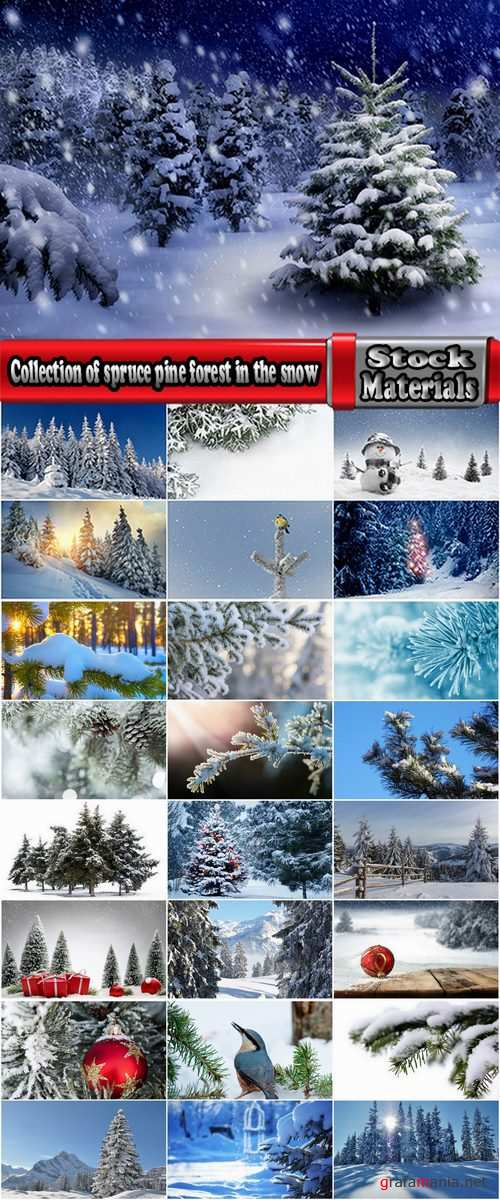 Collection of spruce pine forest in the snow snow winter 25 HQ Jpeg