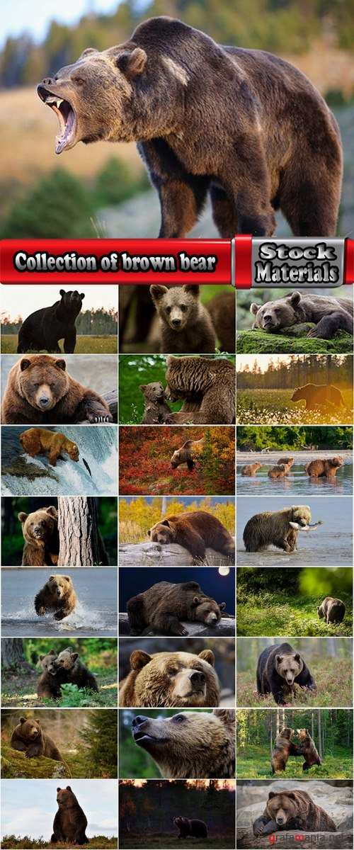Collection of brown bear nature landscape forest tree 25 HQ Jpeg