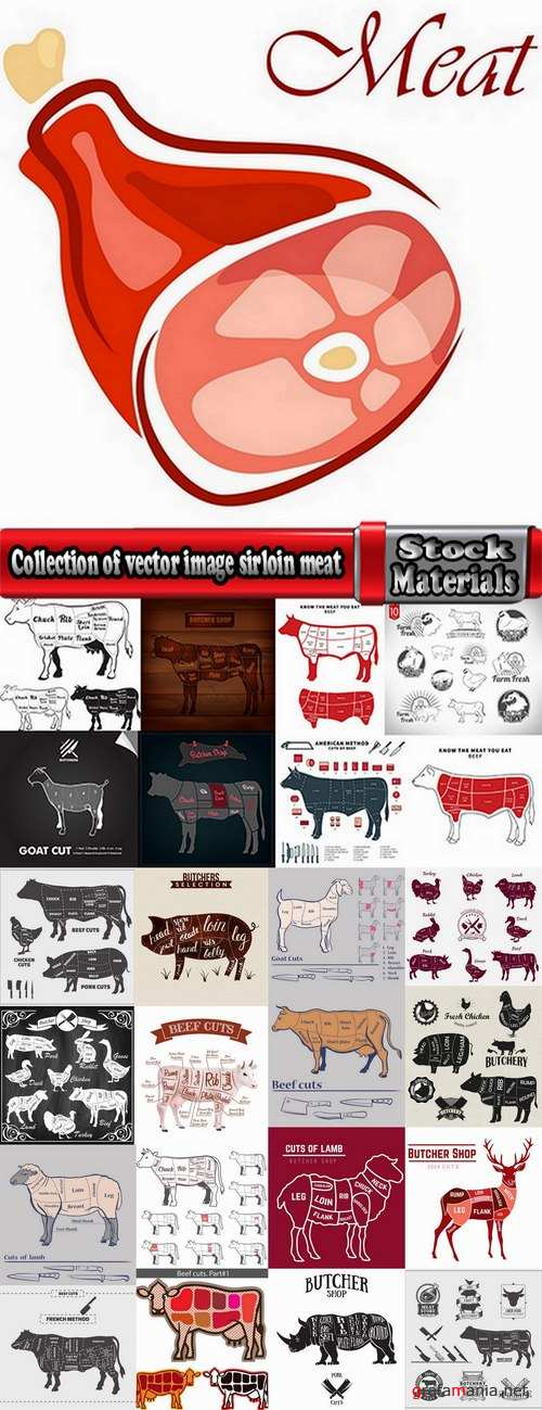 Collection of vector image sirloin meat cattle meat cutting meat cutting scheme 25 EPS