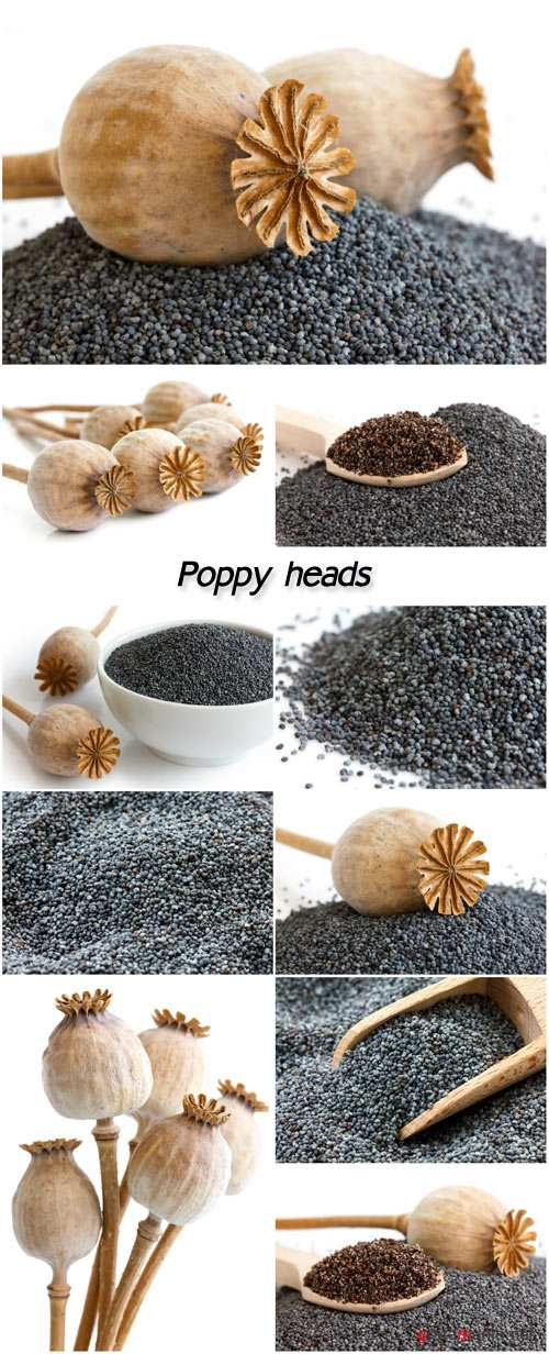 Poppy heads, black poppies
