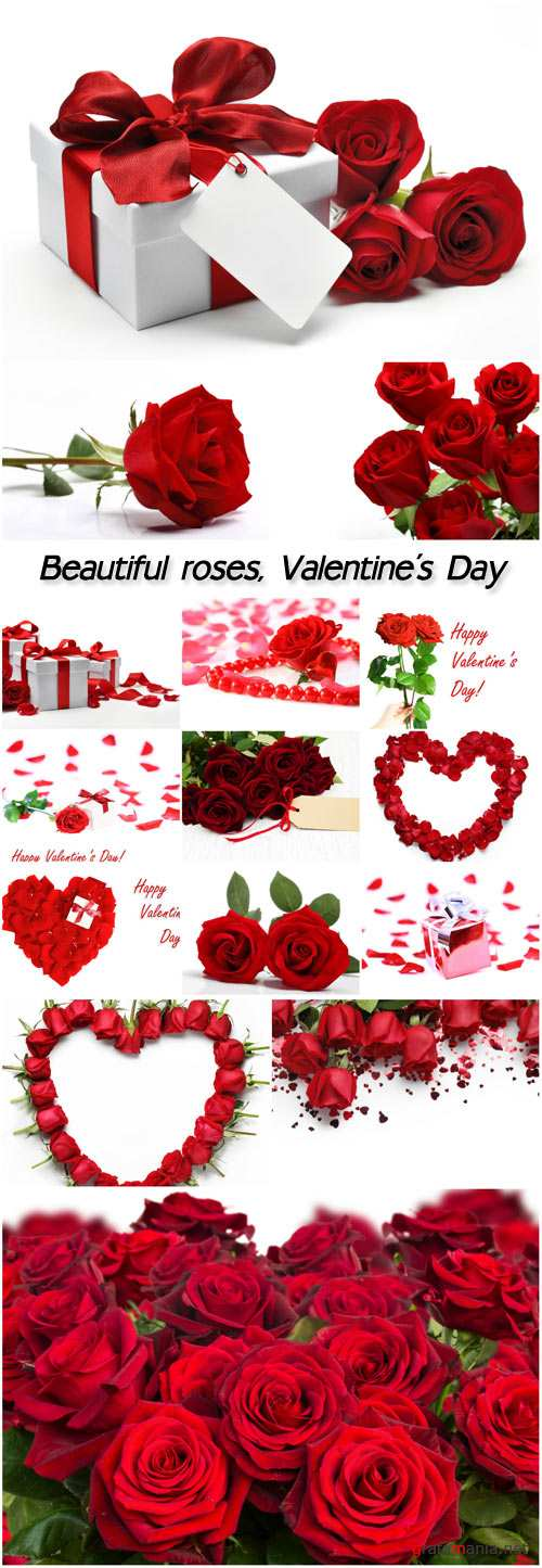 Beautiful roses, Valentine's Day