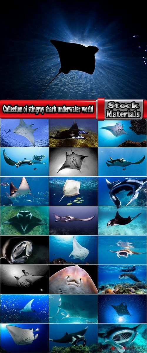 Collection of stingray shark underwater world of the reef manta 25 HQ Jpeg