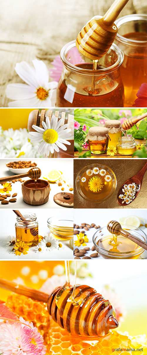 Stock Image  Honey with daisy and camomile
