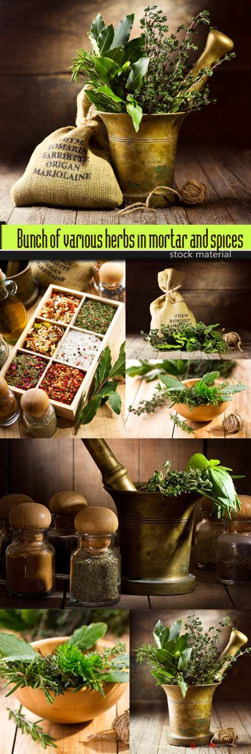 Bunch of various herbs in mortar and spices