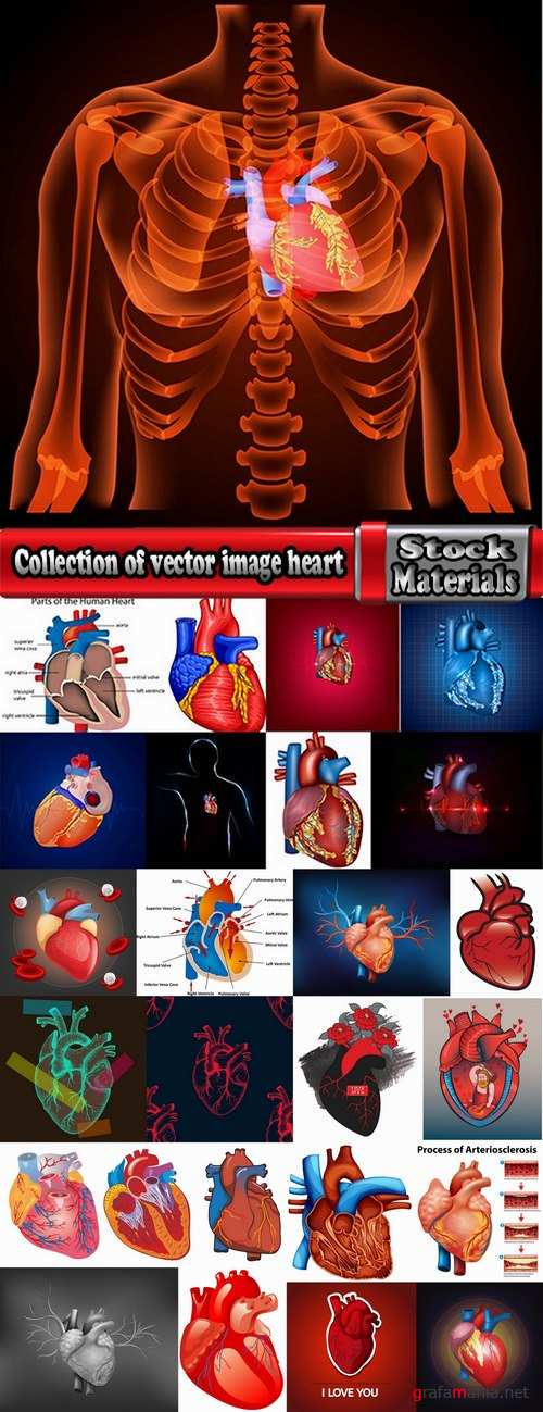 Collection of vector image medicine the human body heart 25 EPS