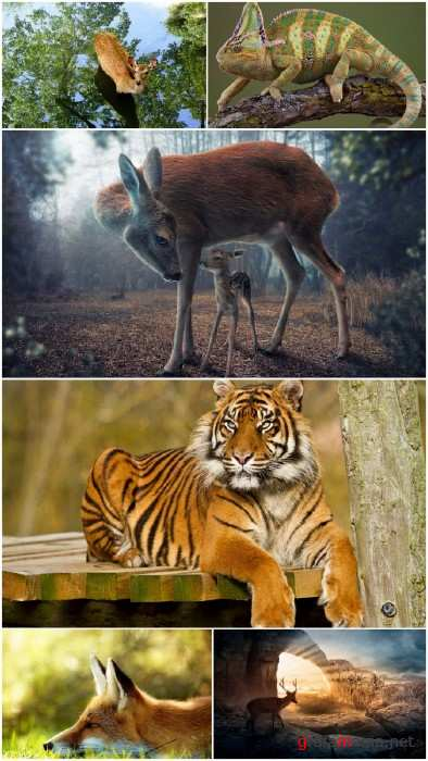 Wild Animals wallpapers (Part 13)
