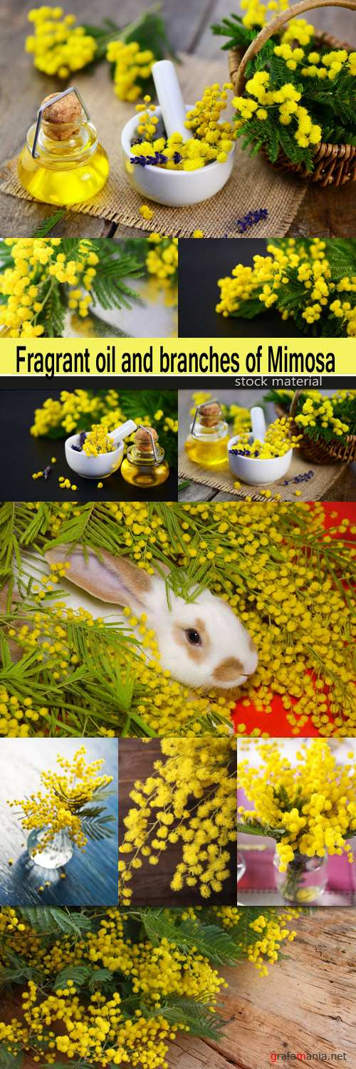 Fragrant oil and branches of Mimosa