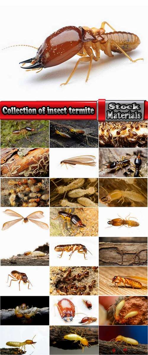 Collection of insect termite mound ant colony 25 HQ Jpeg