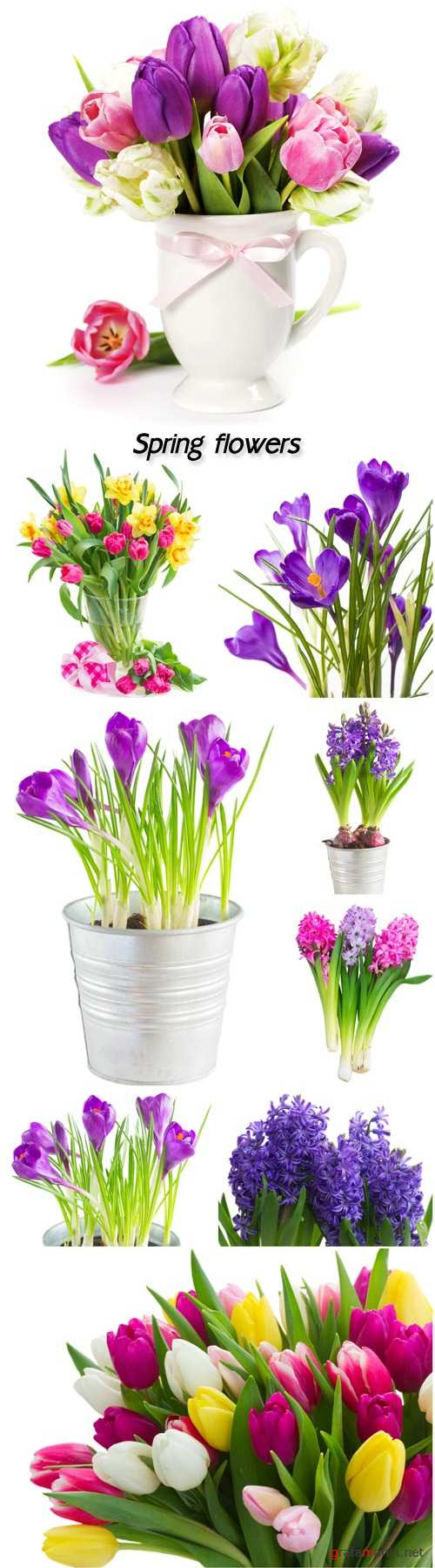 Spring flowers, hyacinths, crocuses and tulips