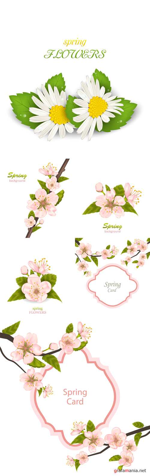 Vector Spring Background with Cherry Blossom