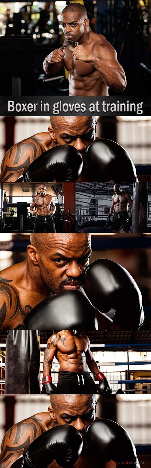 Boxer in gloves at training