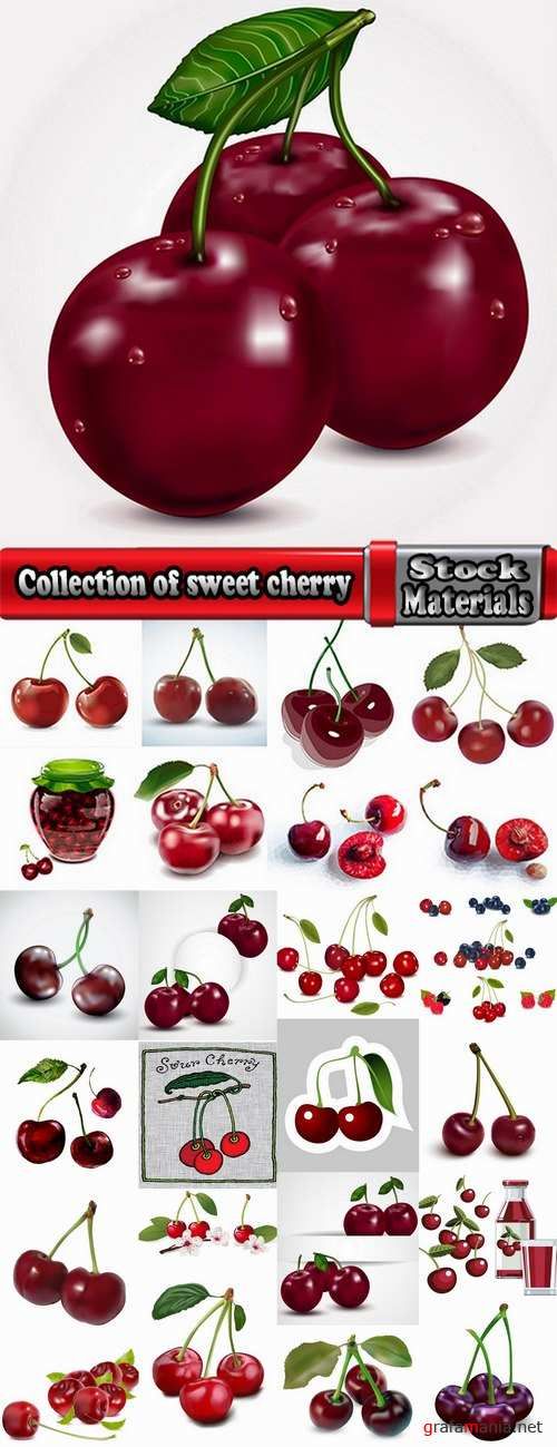 Collection of sweet cherry berry cherry vector image 25 EPS