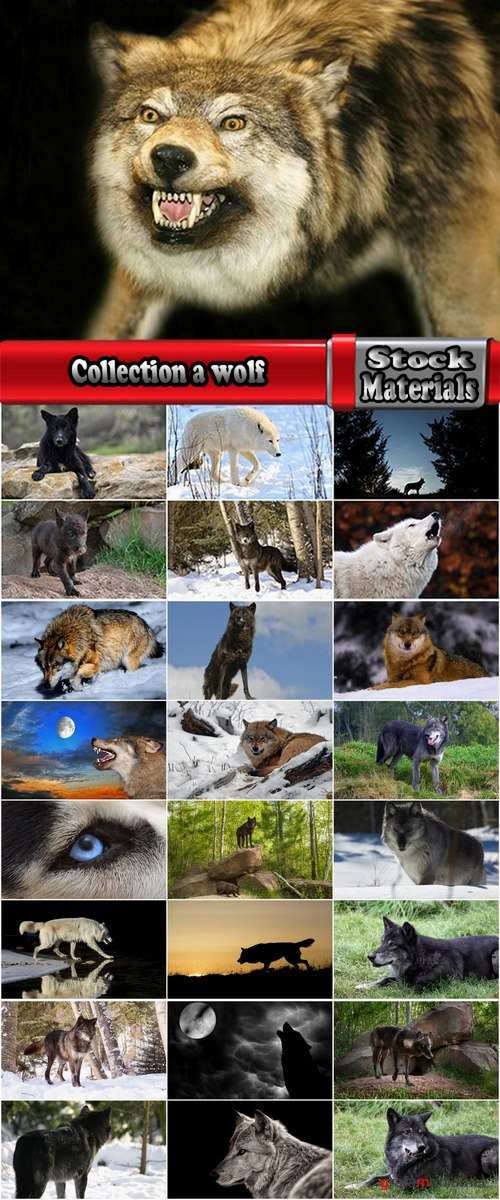 Collection a wolf black gray brown white beast predator 25 HQ Jpeg