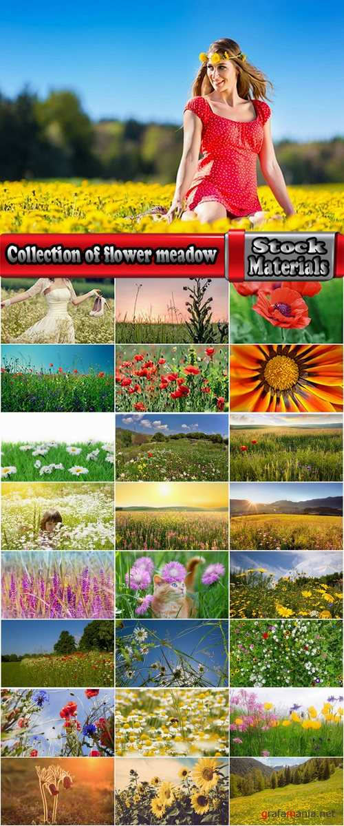 Collection of flower meadow wild flower meadow field sprout landscape 25 HQ Jpeg