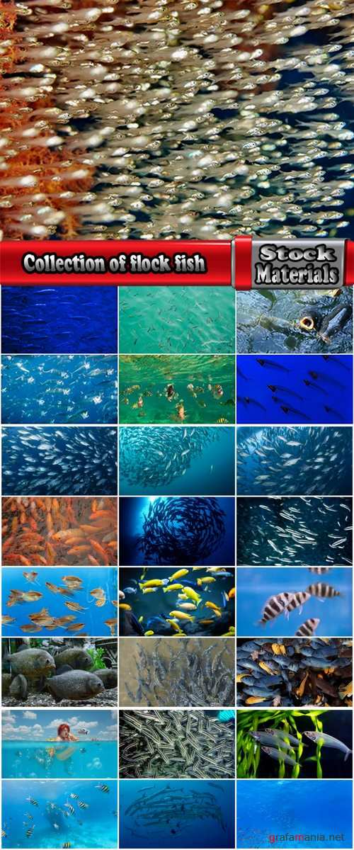 Collection of flock fish sea fish cant set of cloud 25 HQ Jpeg