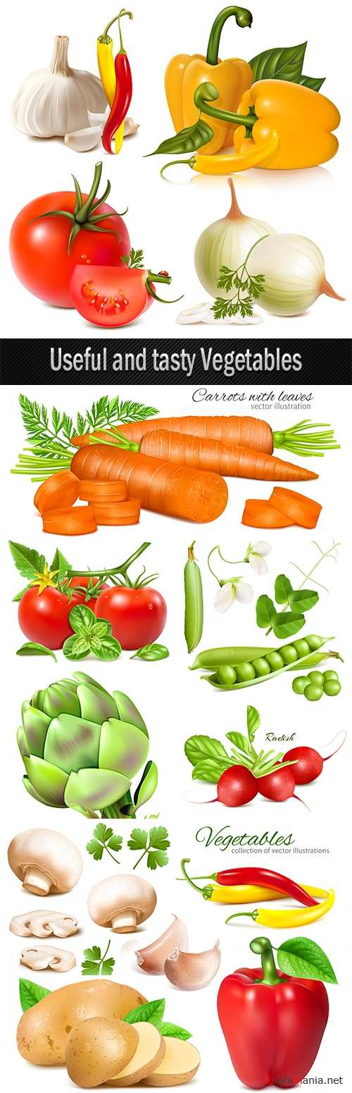 Useful and tasty Vegetables