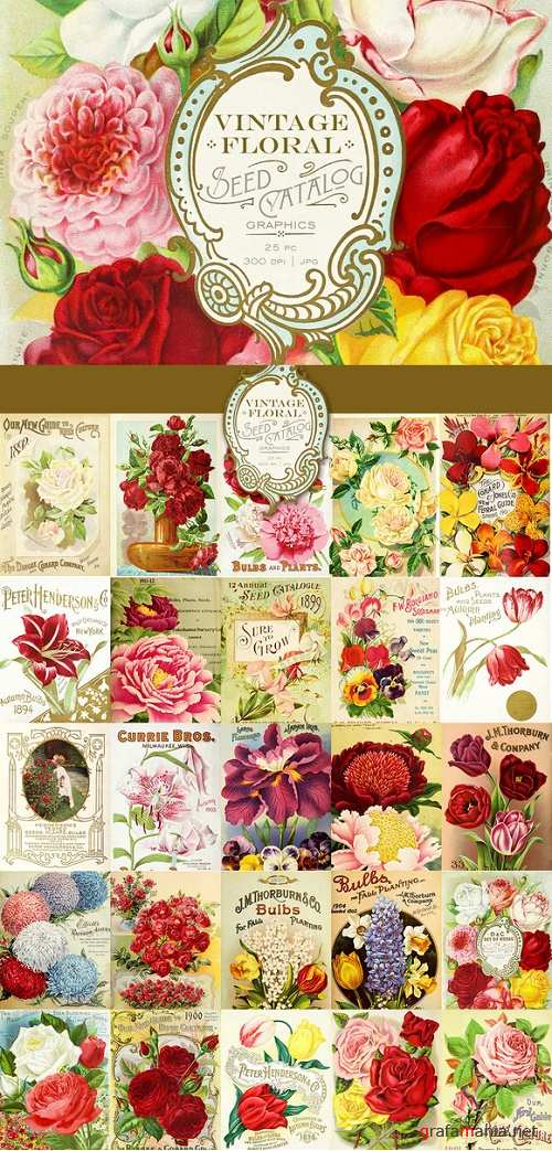 Vintage Floral Seed Catalog Graphics - 496725