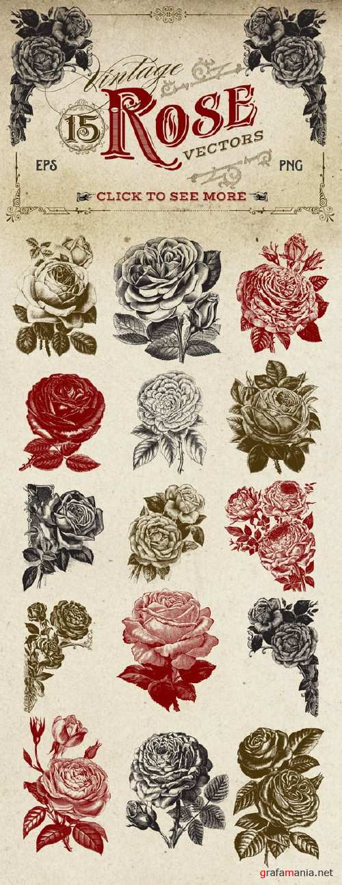 Vintage Rose Vector Graphics - 260145