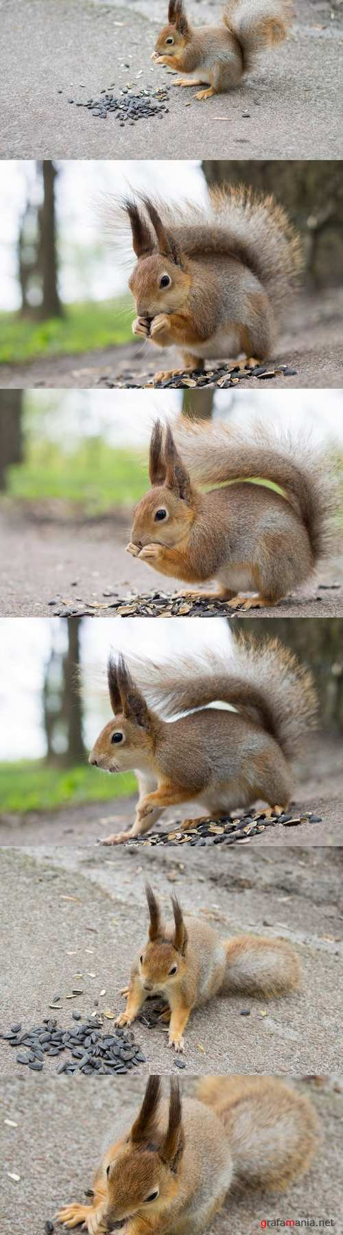 Squirrel eating sunflower seeds