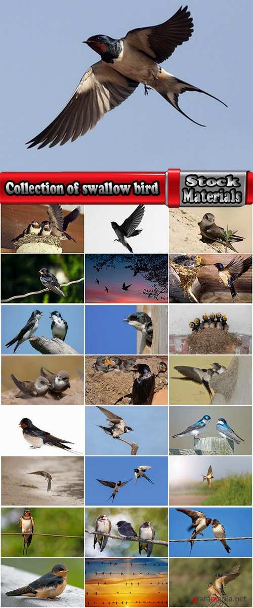 Collection of swallow bird flight wing feather nestling nest 25 HQ Jpeg