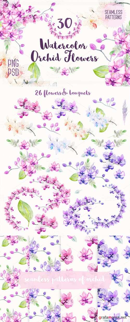 Watercolor Orchid Flowers - 231944