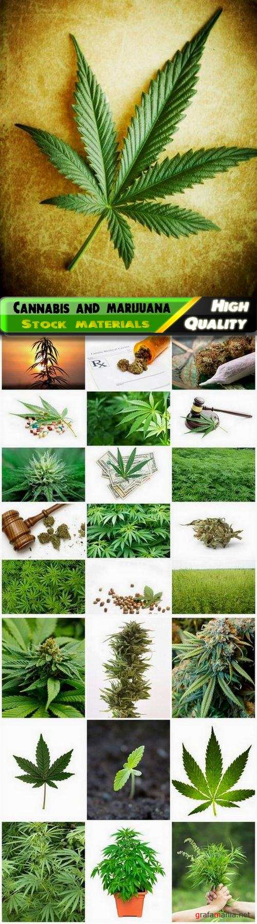 Cannabis leaf and bush and drug marijuana - 25 HQ Jpg