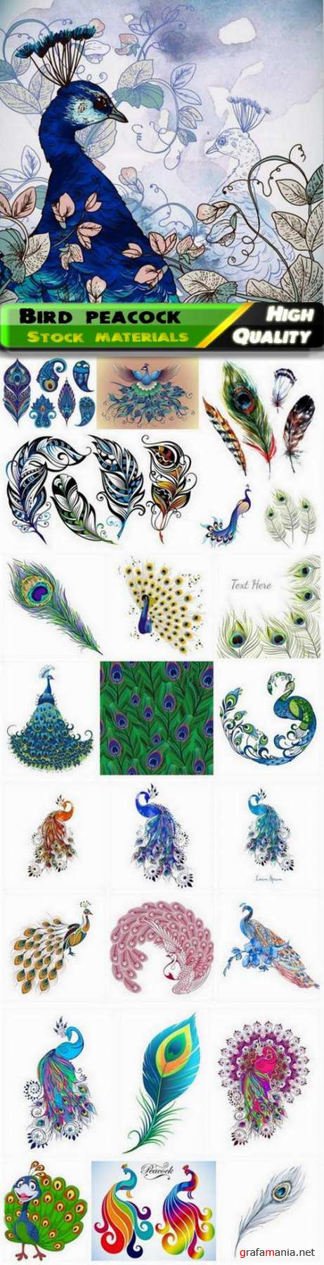 Bird peacock illustration with abstract colorful feathers - 25 Eps