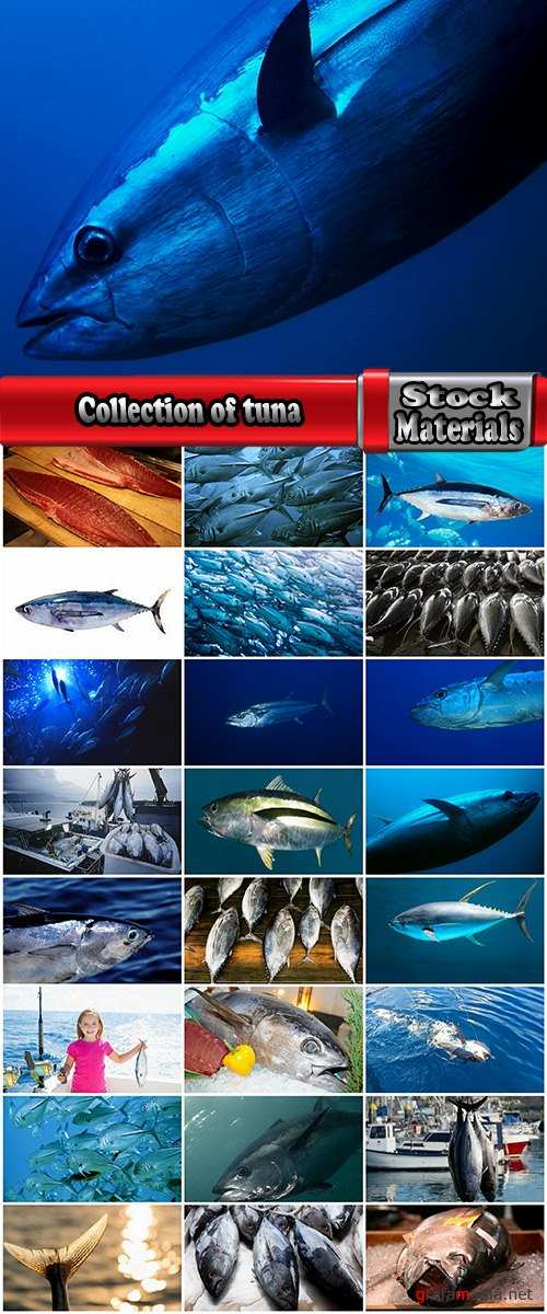 Collection of tuna raw fish catch production of red meat 25 HQ Jpeg