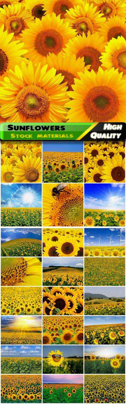 Summer nature landscape and field with sunflowers - 25 HQ Jpg
